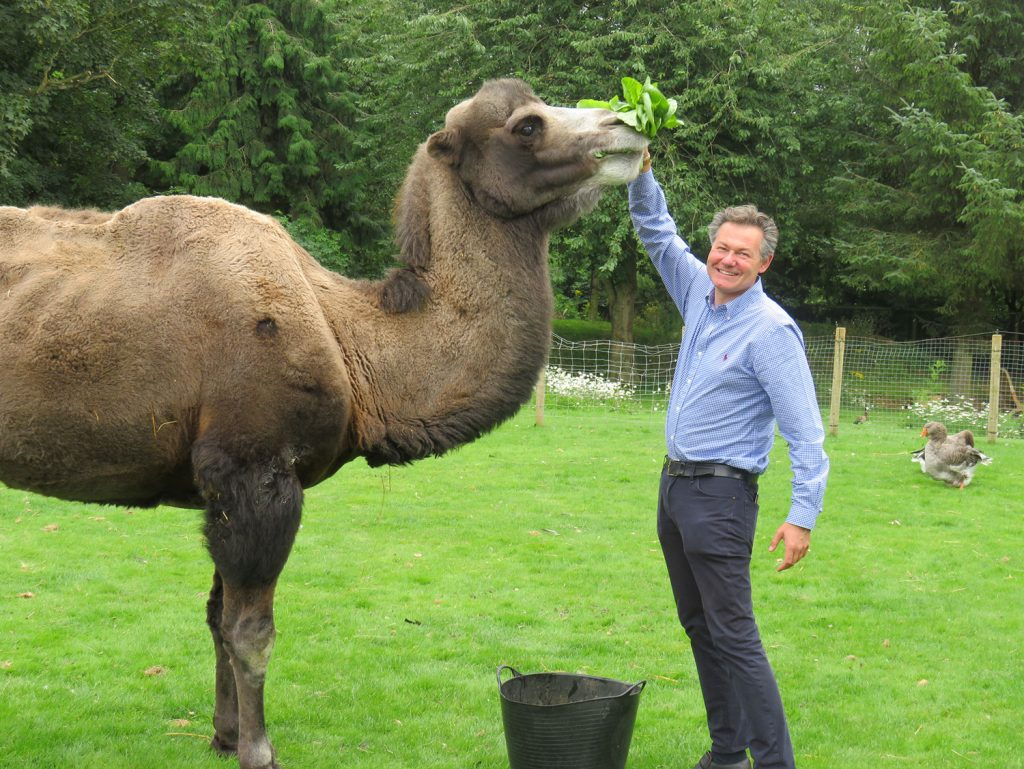 Colin the Camel and Vernon
